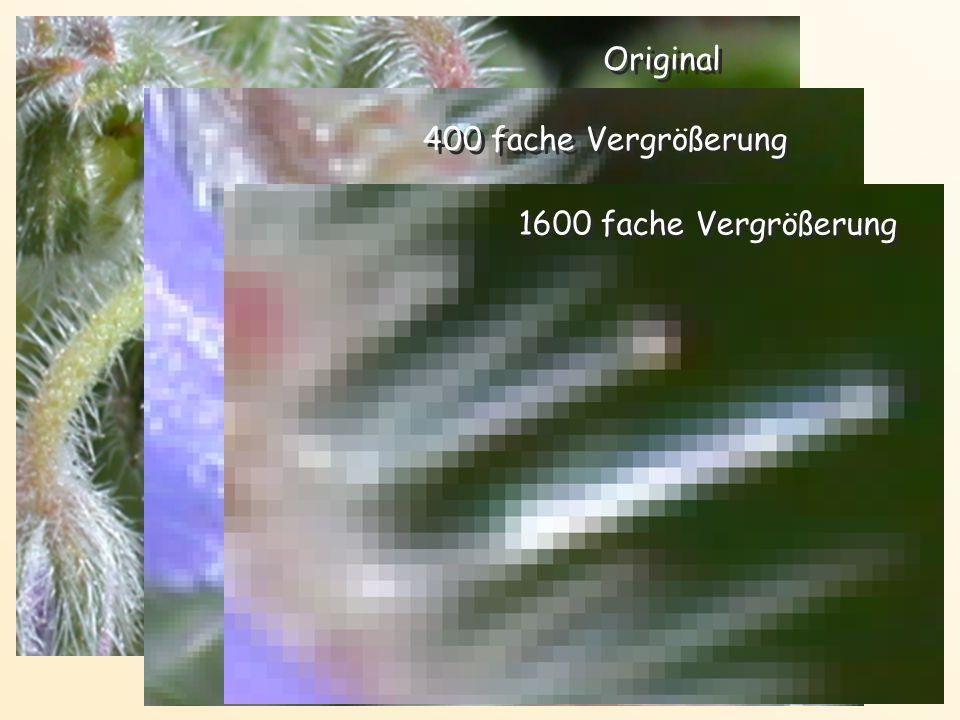 Original 400 fache Vergrößerung 1600 fache Vergrößerung