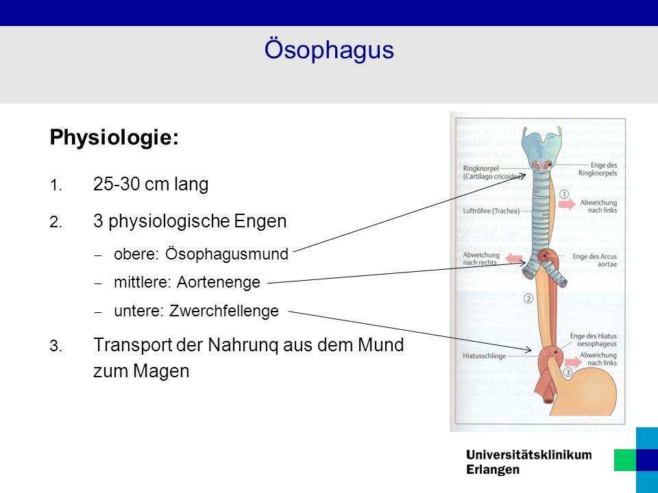 Ösophagus Physiologie: 25-30 cm lang 3 physiologische Engen