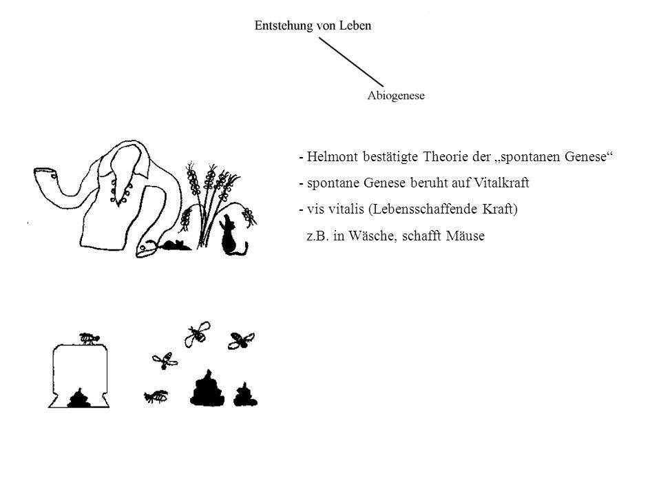 """- Helmont bestätigte Theorie der """"spontanen Genese"""