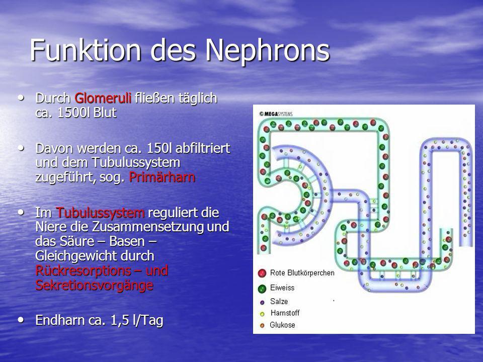 Funktion des Nephrons Durch Glomeruli fließen täglich ca. 1500l Blut