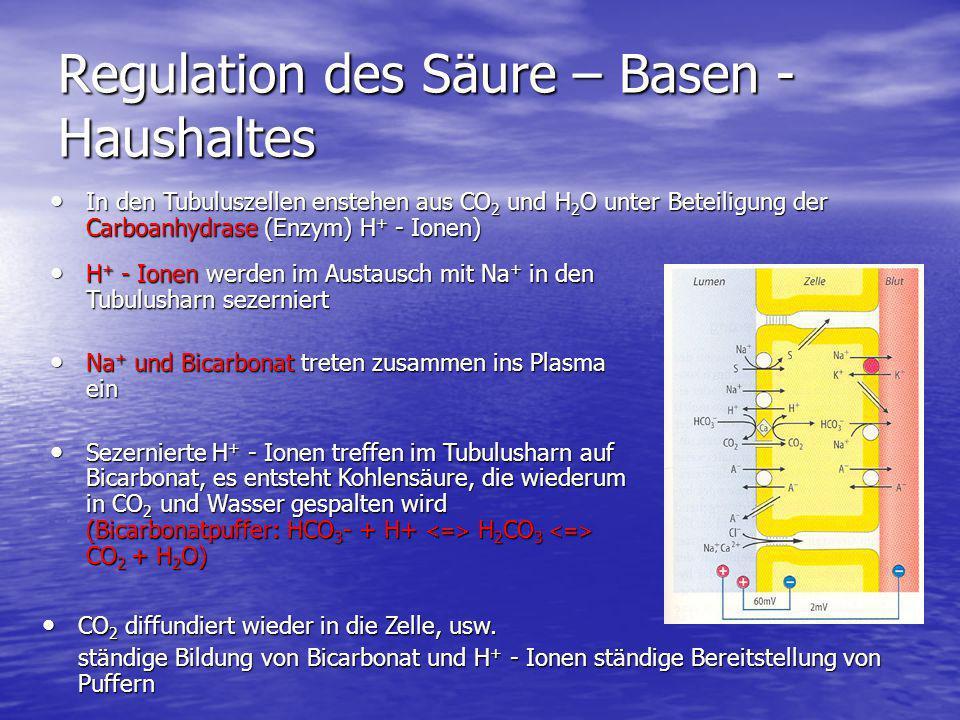 Regulation des Säure – Basen - Haushaltes