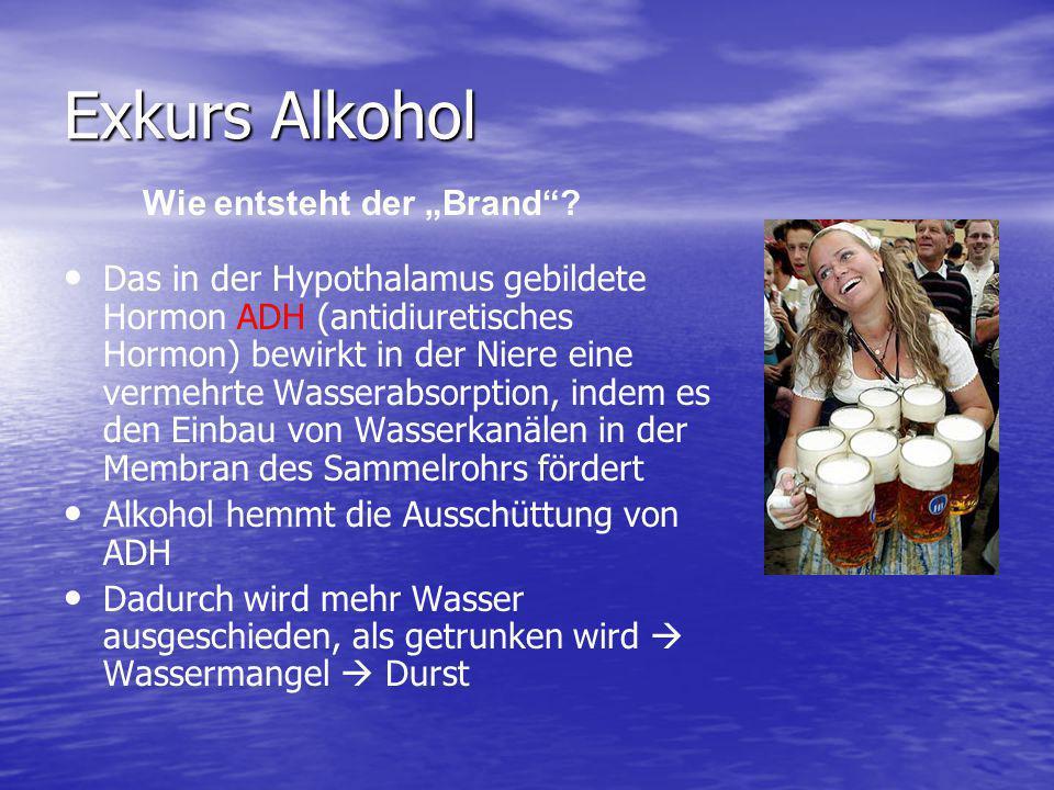 """Exkurs Alkohol Wie entsteht der """"Brand"""
