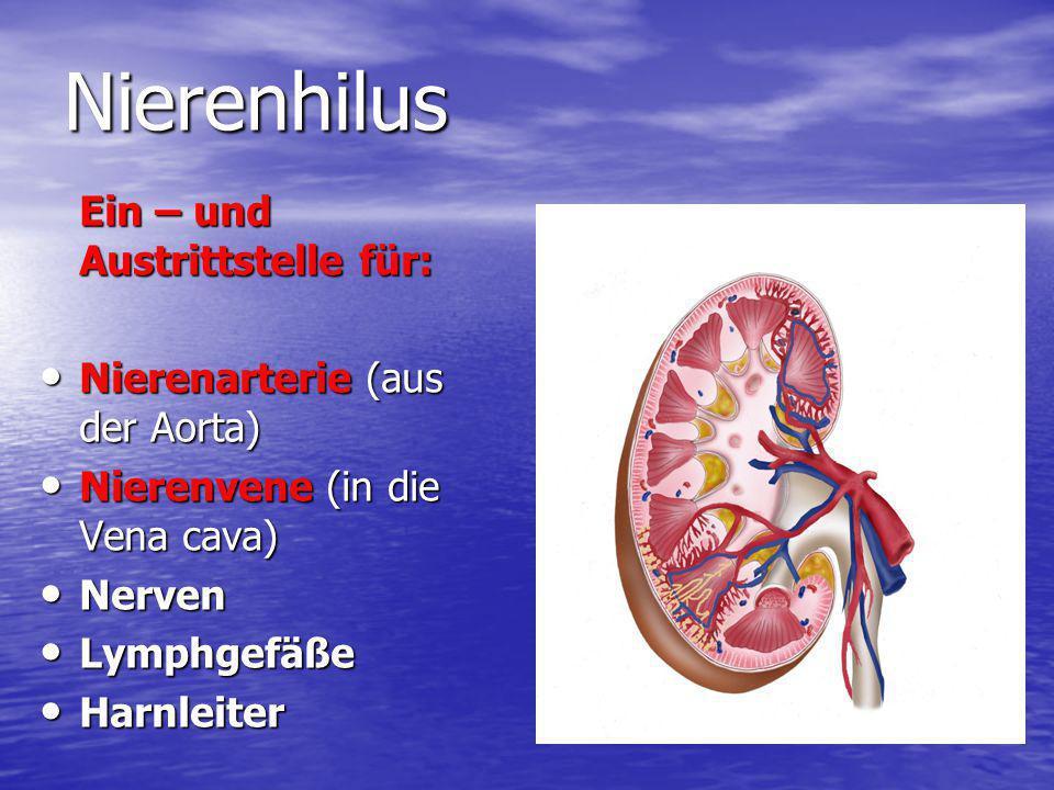 Nierenhilus Ein – und Austrittstelle für: