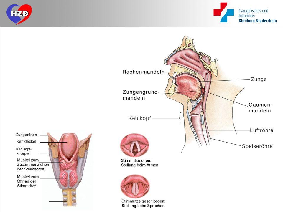 Großzügig Intubation Der Atemwege Anatomie Ideen - Menschliche ...