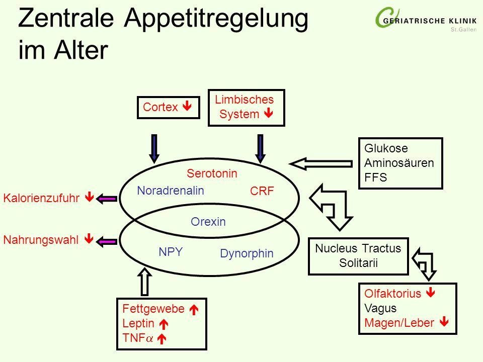 Zentrale Appetitregelung im Alter
