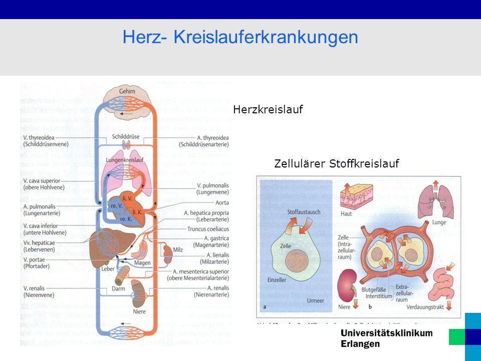 Herz- Kreislauferkrankungen