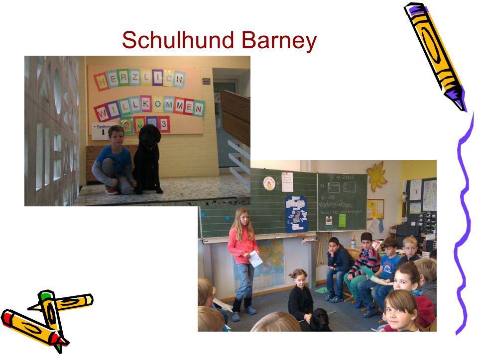 Schulhund Barney