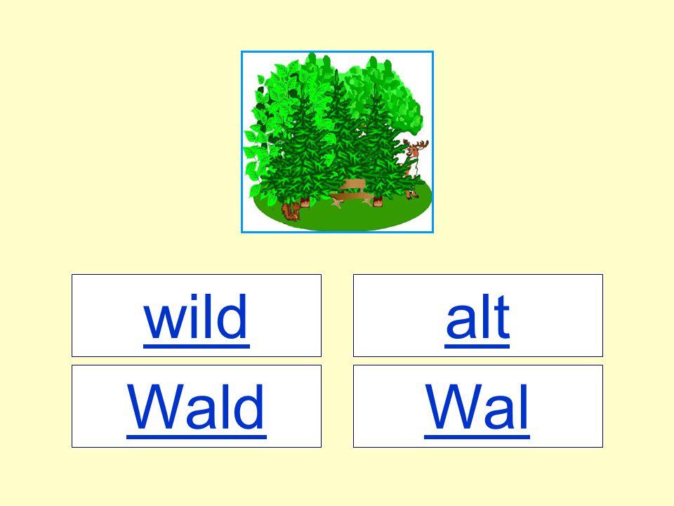 wild alt Wald Wal