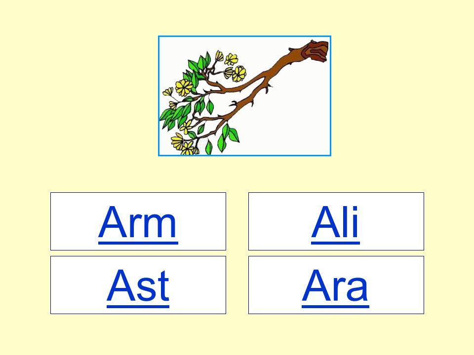 Arm Ali Ast Ara