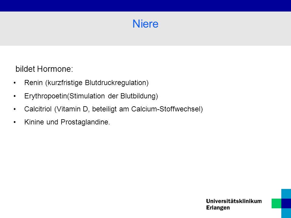 Niere bildet Hormone: Renin (kurzfristige Blutdruckregulation)