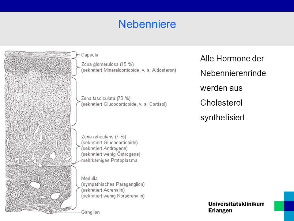 Nebenniere Alle Hormone der Nebennierenrinde werden aus Cholesterol synthetisiert.