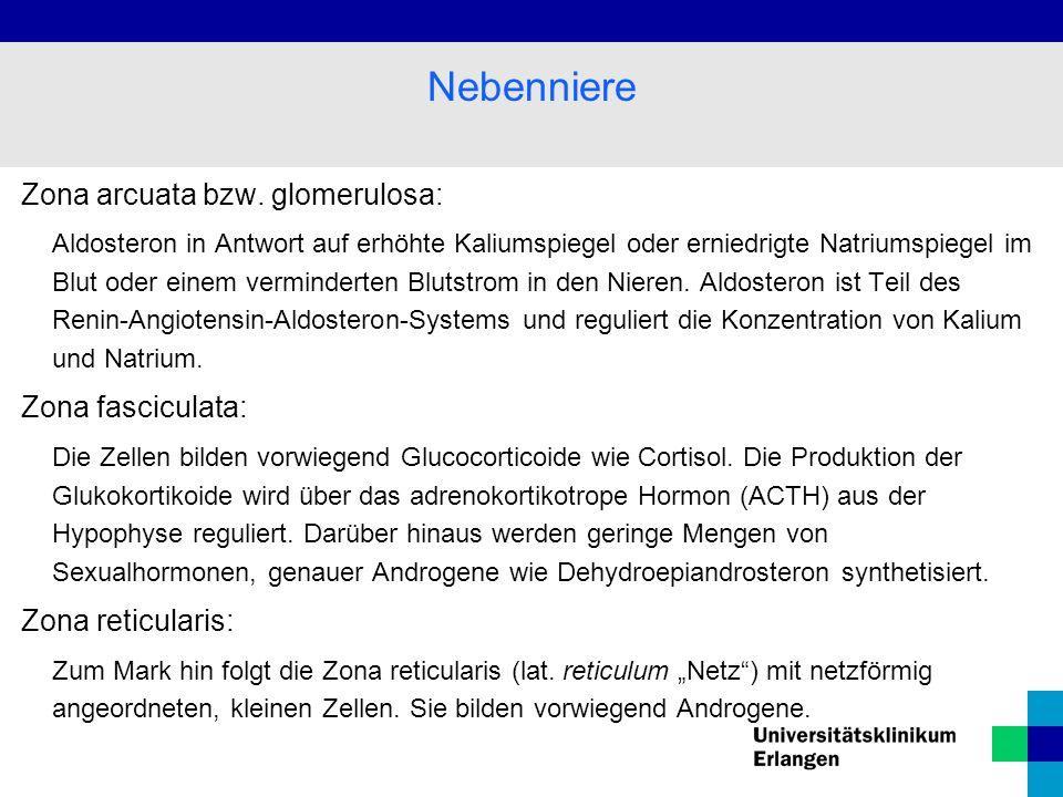 Nebenniere Zona arcuata bzw. glomerulosa: Zona fasciculata: