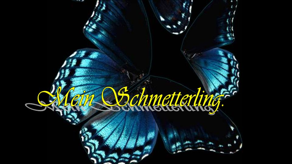 Mein Schmetterling.