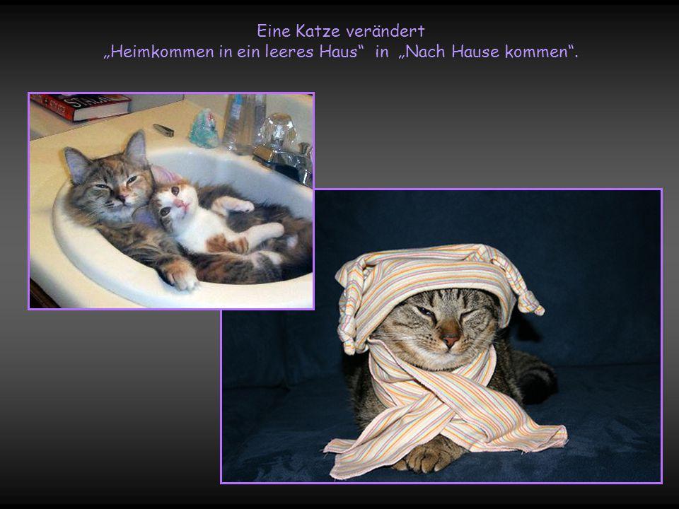 """Eine Katze verändert """"Heimkommen in ein leeres Haus in """"Nach Hause kommen ."""