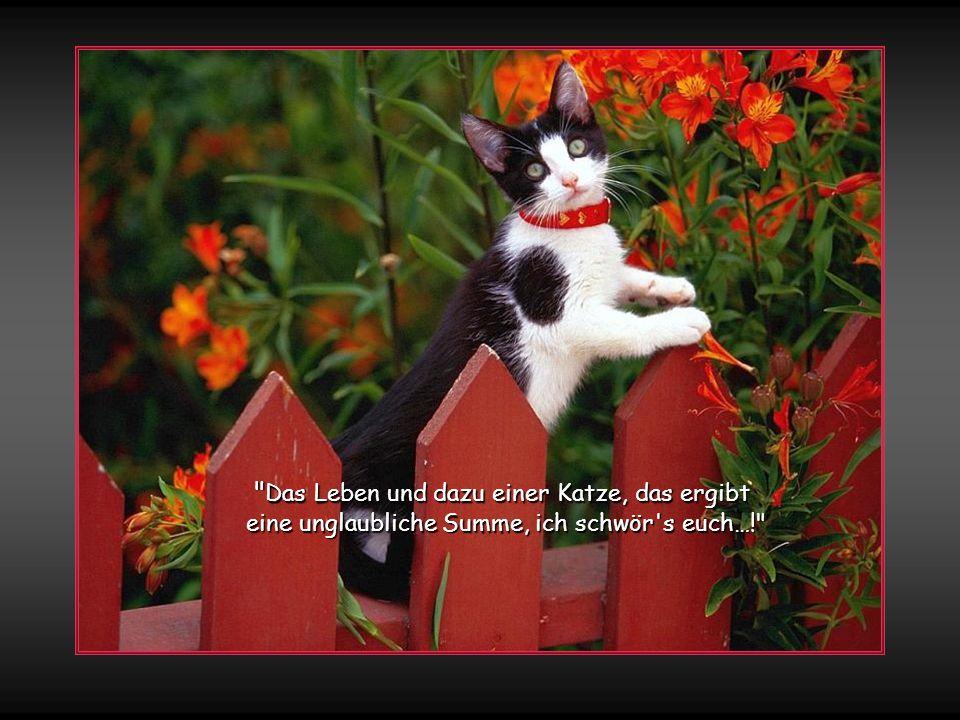 Das Leben und dazu einer Katze, das ergibt eine unglaubliche Summe, ich schwör s euch…!