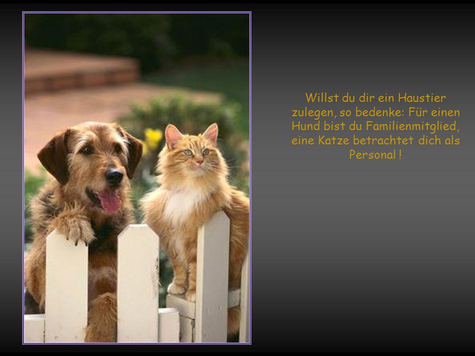 Willst du dir ein Haustier zulegen, so bedenke: Für einen Hund bist du Familienmitglied, eine Katze betrachtet dich als Personal !