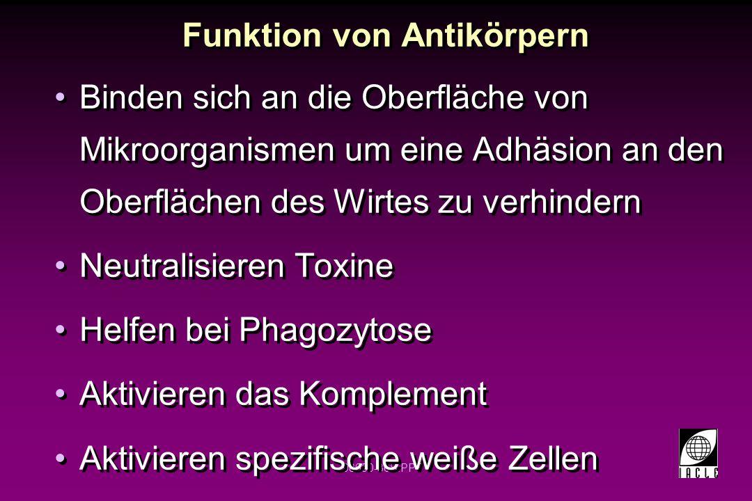 Funktion von Antikörpern