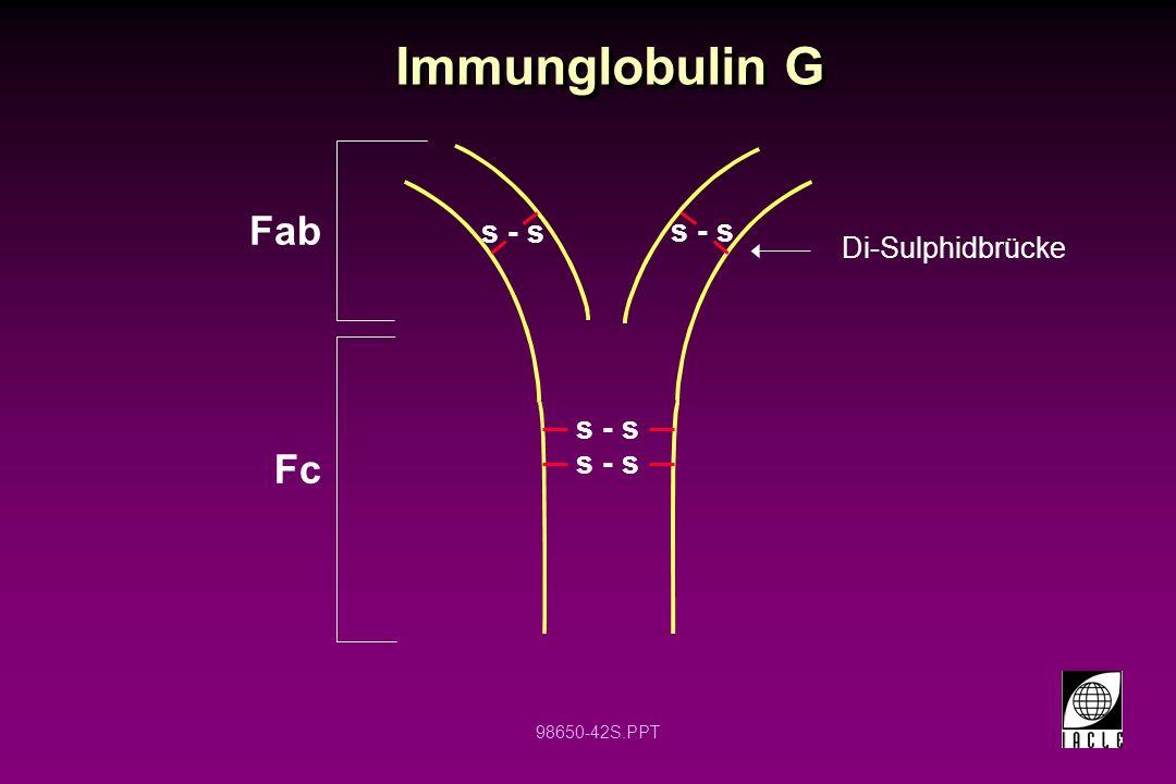 Immunglobulin G Fab s - s s - s Di-Sulphidbrücke s - s Fc s - s 12 12