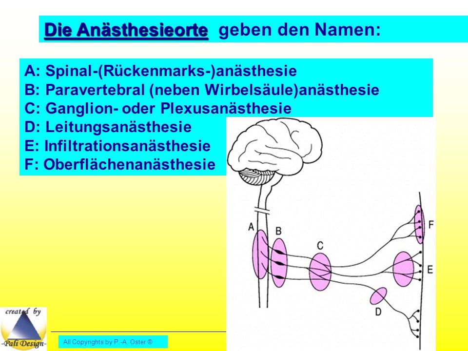 Die Anästhesieorte geben den Namen: