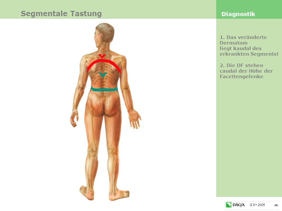 Segmentale Tastung Diagnostik 1. Das veränderte Dermatom
