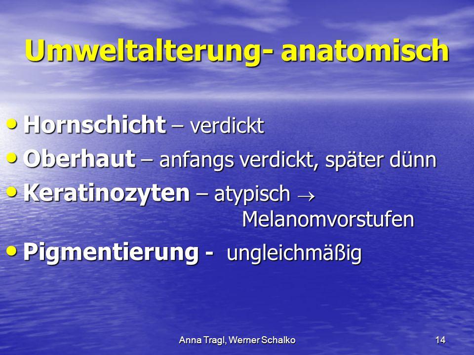 Umweltalterung- anatomisch