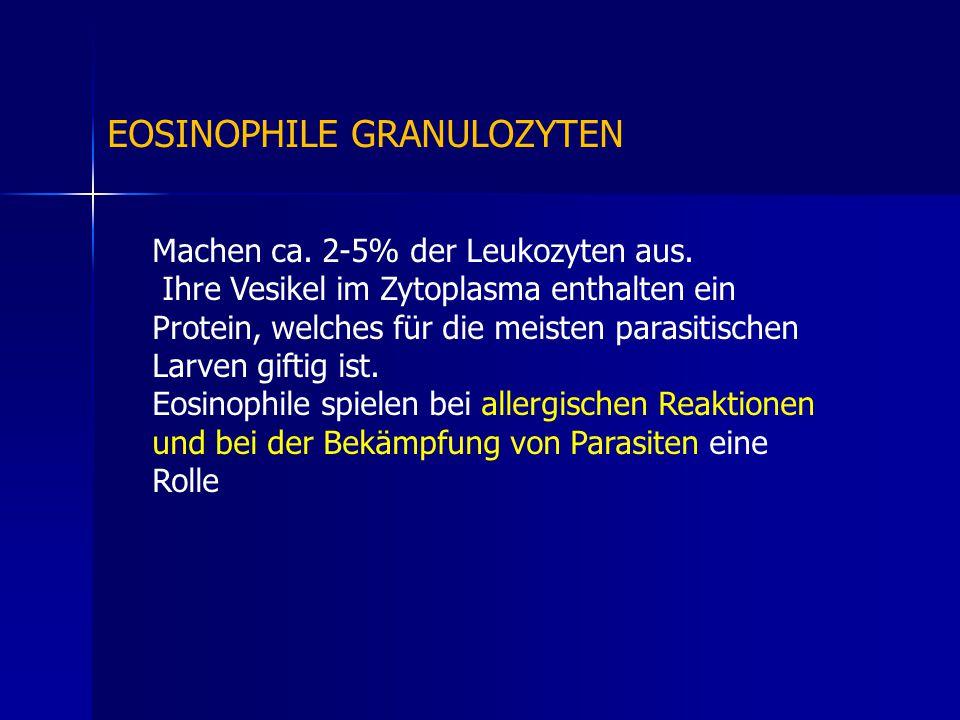 EOSINOPHILE GRANULOZYTEN