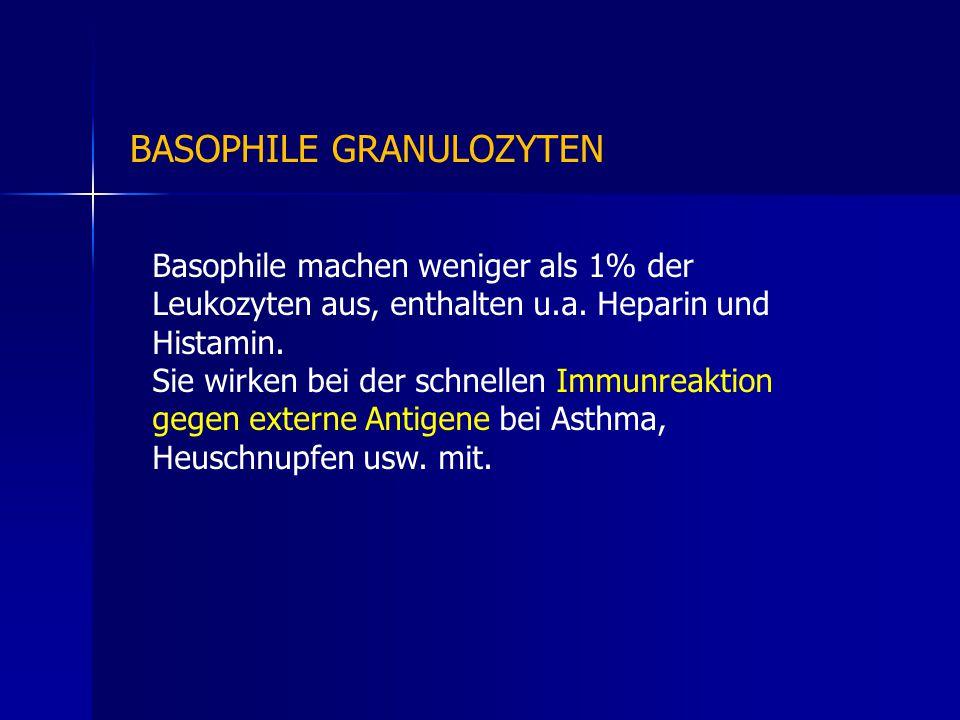 BASOPHILE GRANULOZYTEN