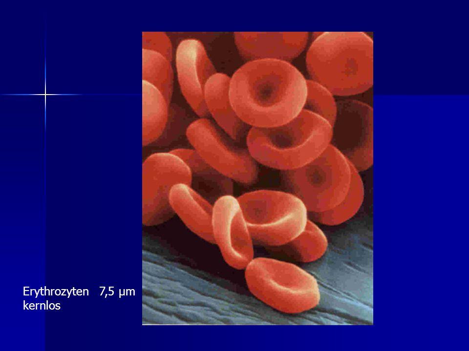 Erythrozyten 7,5 µm kernlos