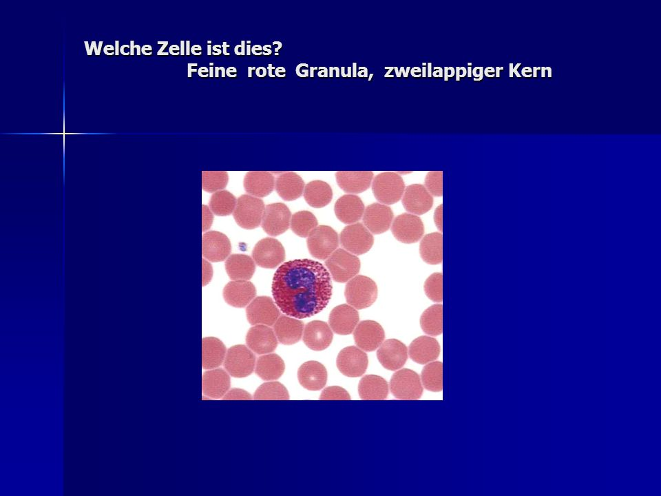 Welche Zelle ist dies Feine rote Granula, zweilappiger Kern