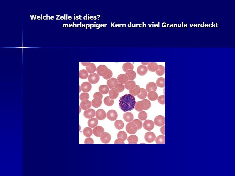 Welche Zelle ist dies mehrlappiger Kern durch viel Granula verdeckt