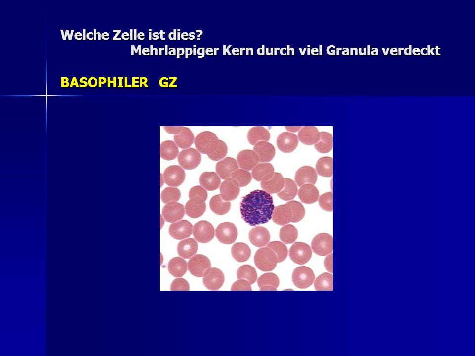 Welche Zelle ist dies Mehrlappiger Kern durch viel Granula verdeckt BASOPHILER GZ