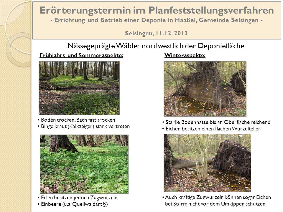 Nässegeprägte Wälder nordwestlich der Deponiefläche