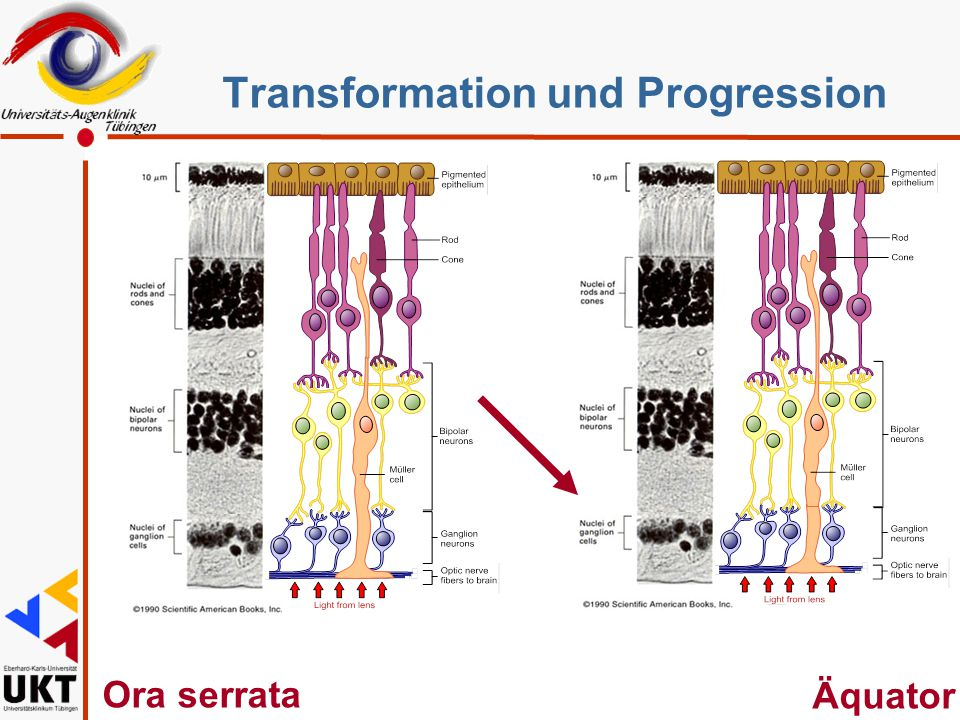 Transformation und Progression