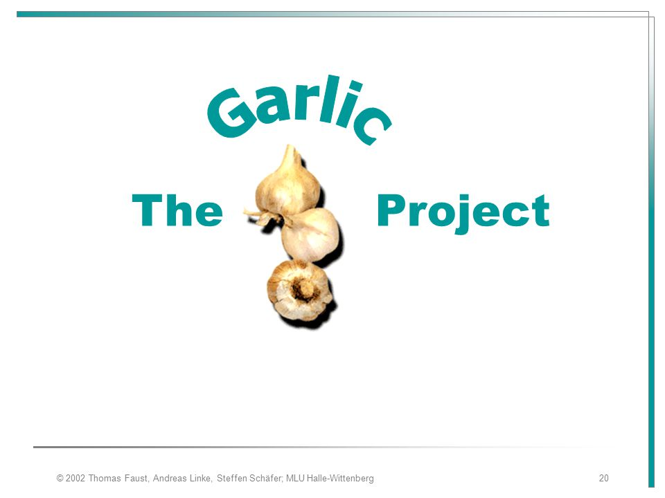 Garlic The Project © 2002 Thomas Faust, Andreas Linke, Steffen Schäfer; MLU Halle-Wittenberg