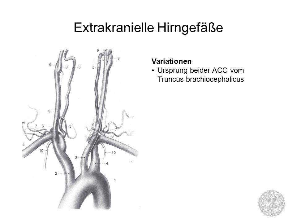 Extrakranielle Hirngefäße