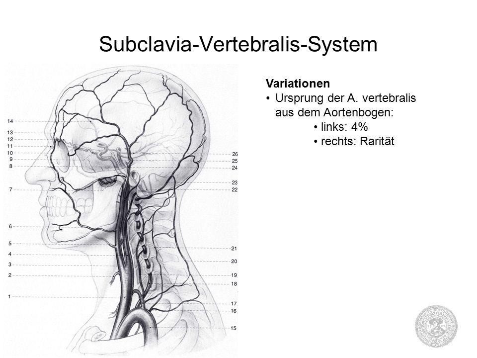 Groß Linker A. Vertebralis Zeitgenössisch - Menschliche Anatomie ...