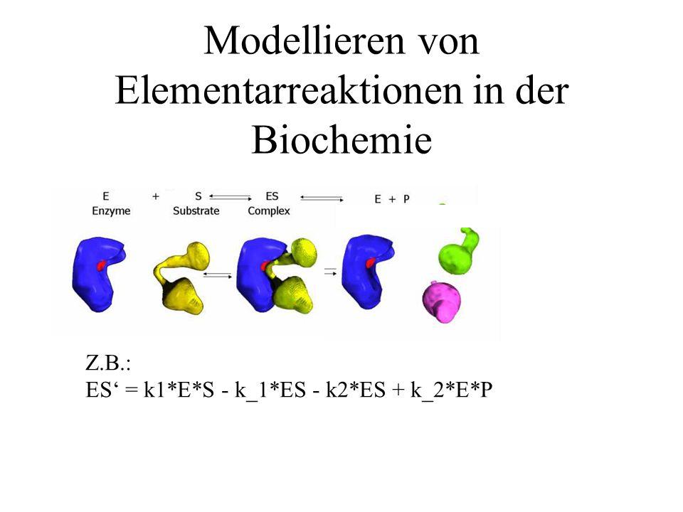 Modellieren von Elementarreaktionen in der Biochemie