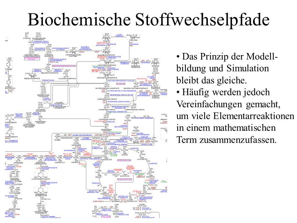 Biochemische Stoffwechselpfade