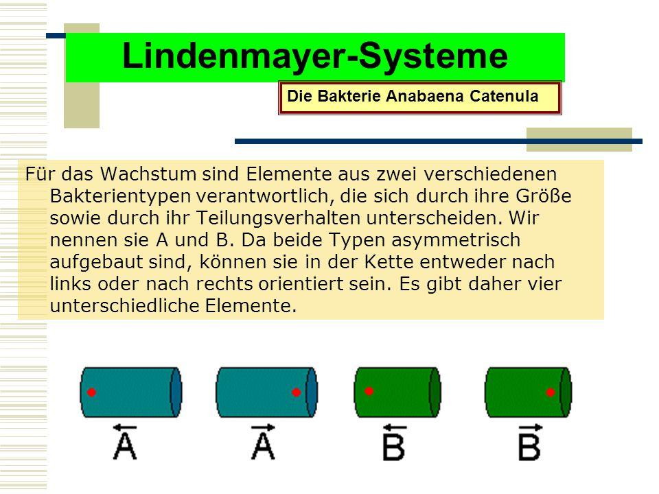 Lindenmayer-Systeme Die Bakterie Anabaena Catenula.