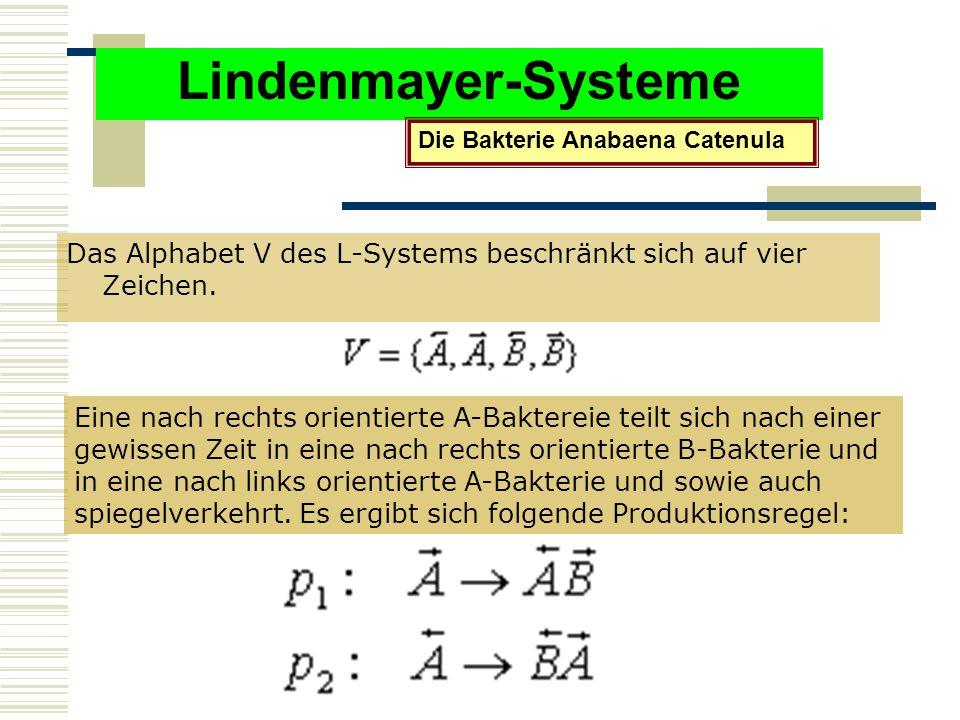 Lindenmayer-Systeme Die Bakterie Anabaena Catenula. Das Alphabet V des L-Systems beschränkt sich auf vier Zeichen.