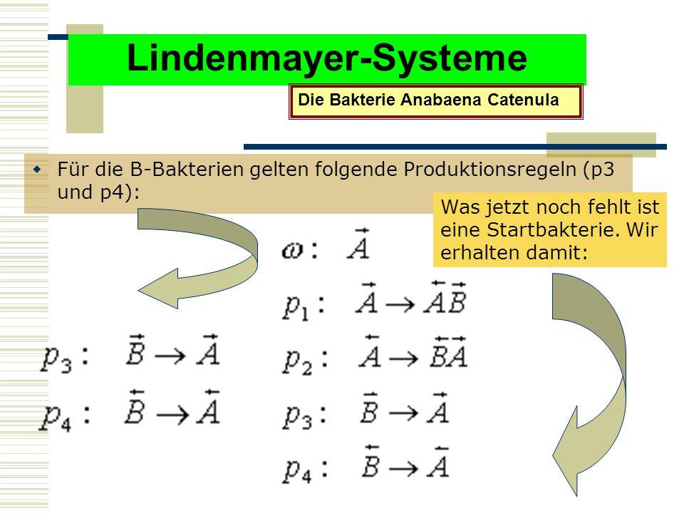 Lindenmayer-Systeme Die Bakterie Anabaena Catenula. Für die B-Bakterien gelten folgende Produktionsregeln (p3 und p4):