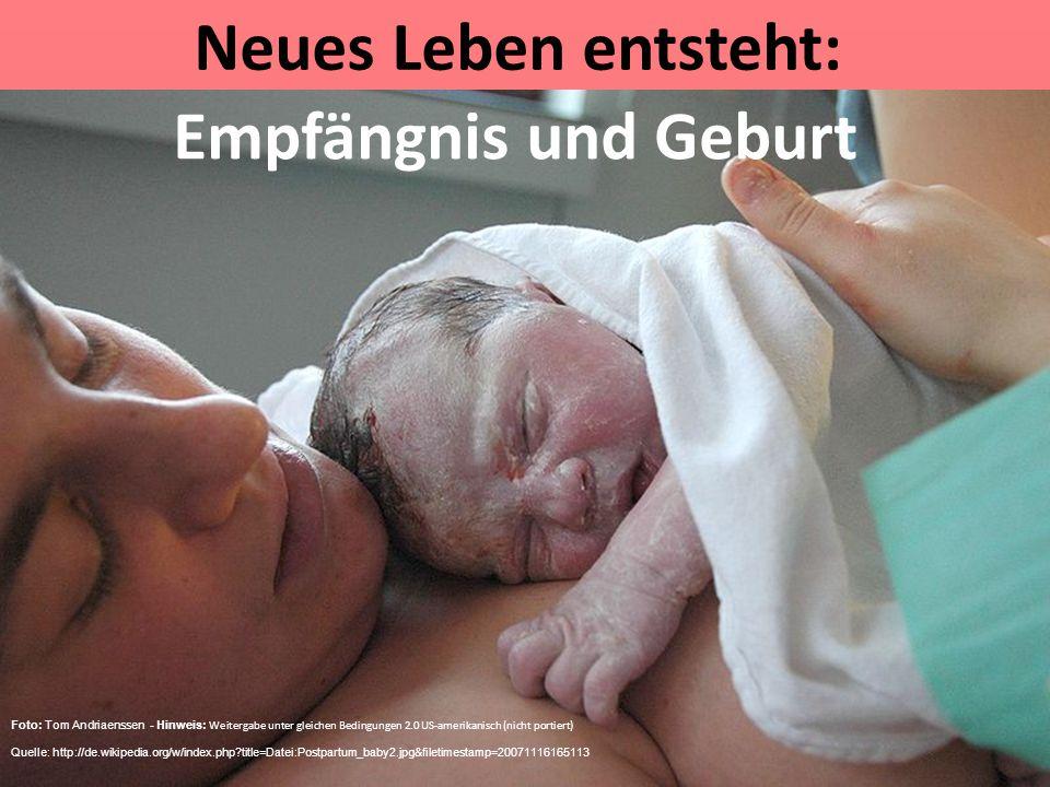 Neues Leben entsteht: Empfängnis und Geburt