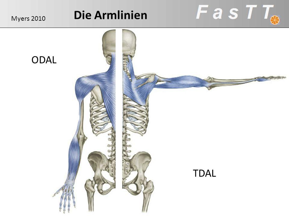Die Armlinien Myers 2010 ODAL TDAL