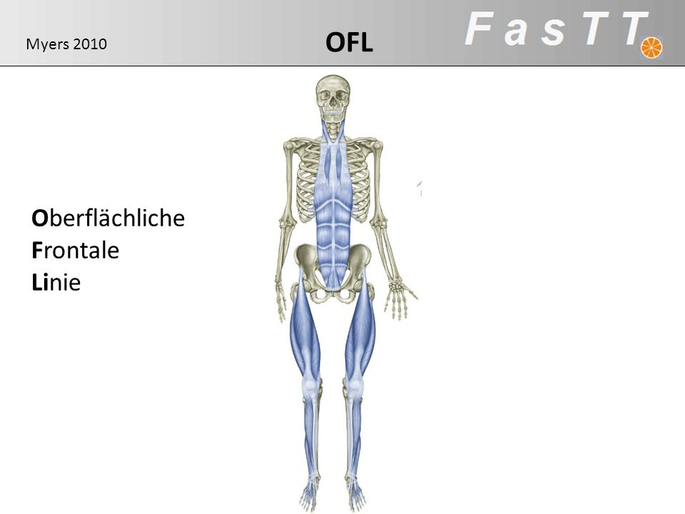 OFL Myers 2010 Oberflächliche Frontale Linie