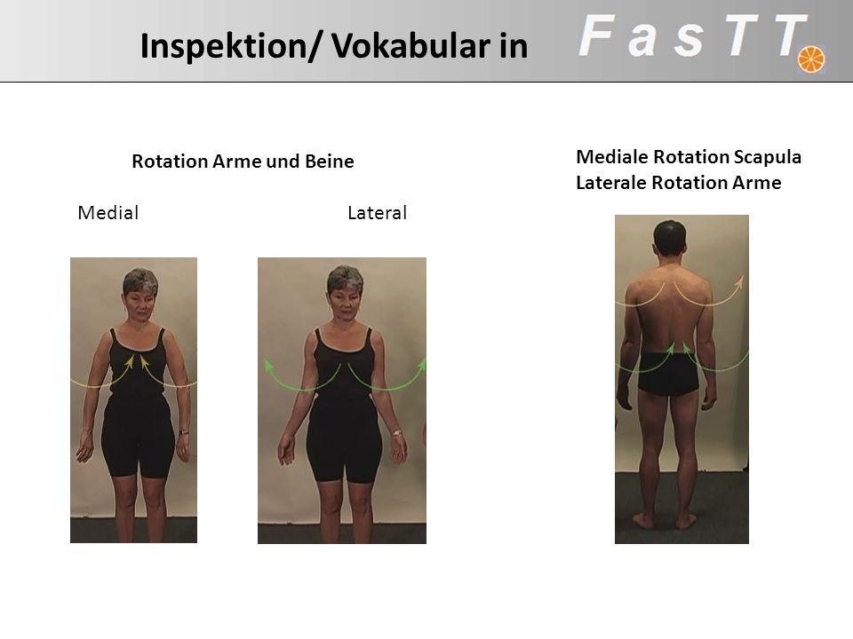 Inspektion/ Vokabular in Rotation Arme und Beine