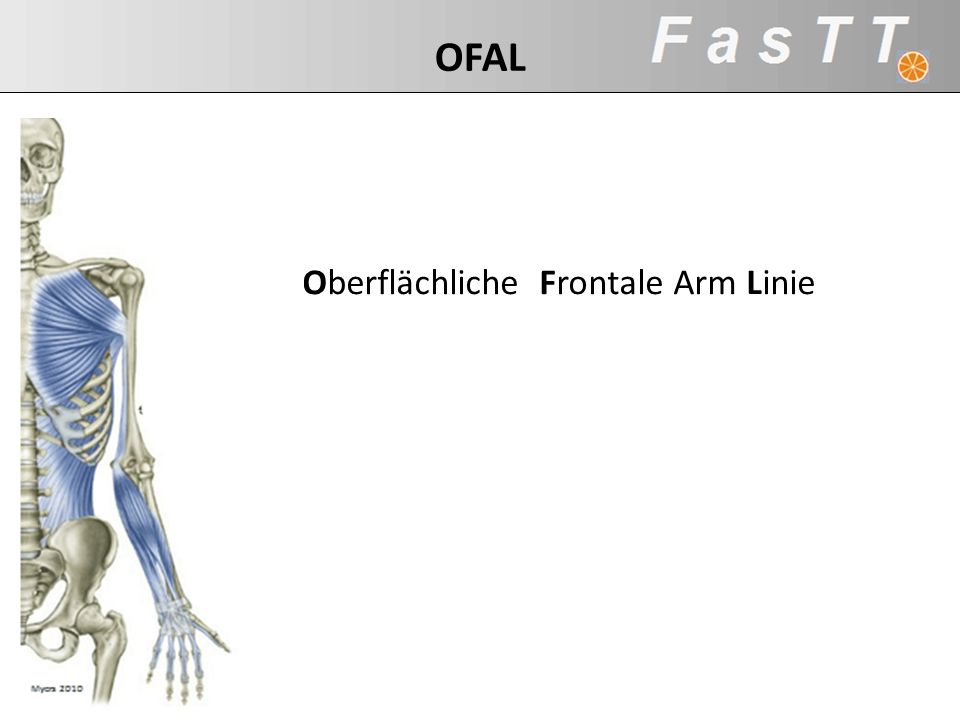OFAL Oberflächliche Frontale Arm Linie SBAL: (47:37min)