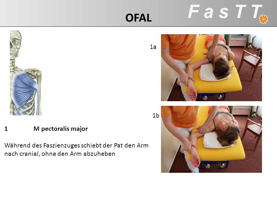 OFAL 1a. 1b. 1 M pectoralis major Während des Faszienzuges schiebt der Pat den Arm nach cranial, ohne den Arm abzuheben.