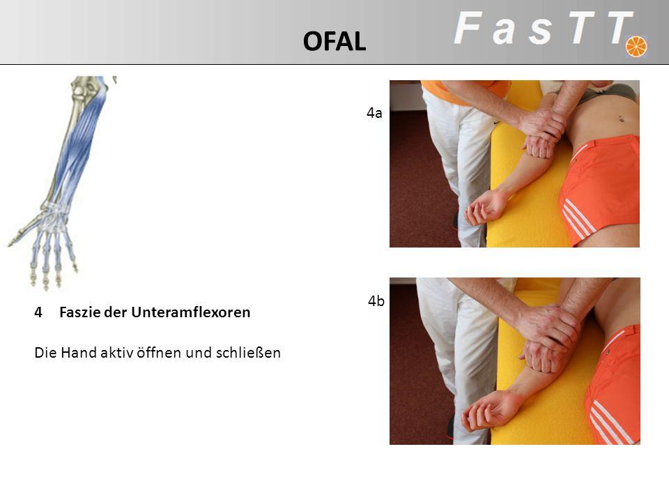 OFAL 4a 4b Faszie der Unteramflexoren