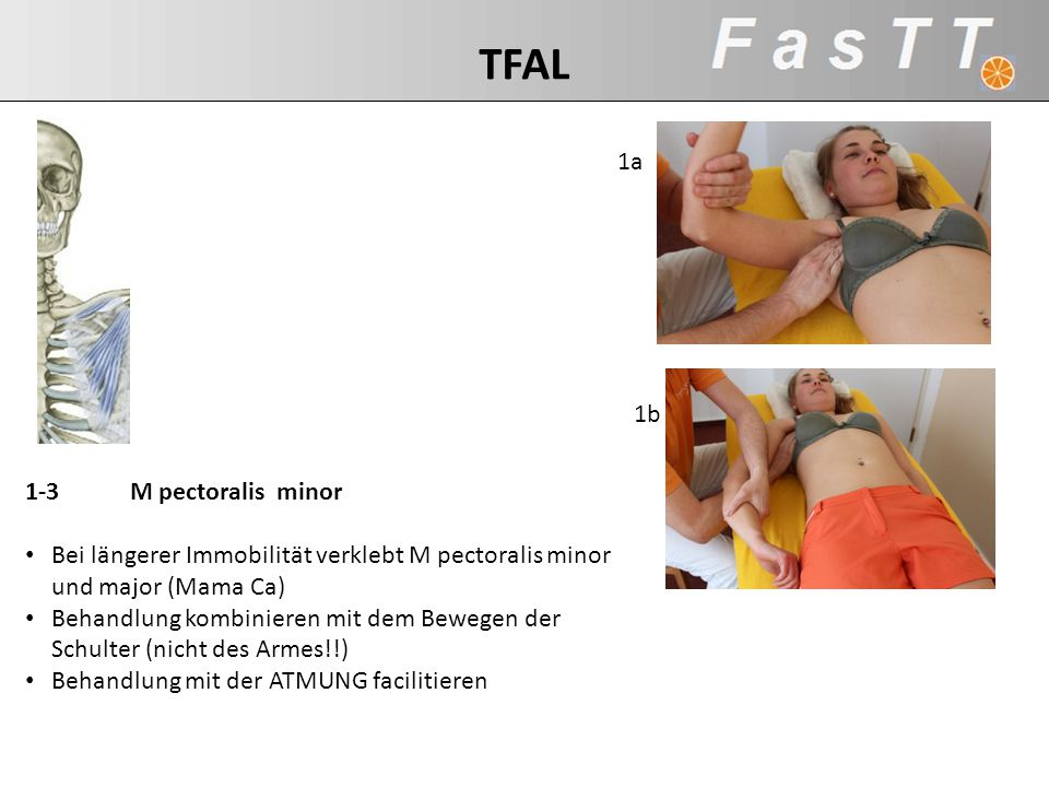 TFAL 1a 1b 1-3 M pectoralis minor
