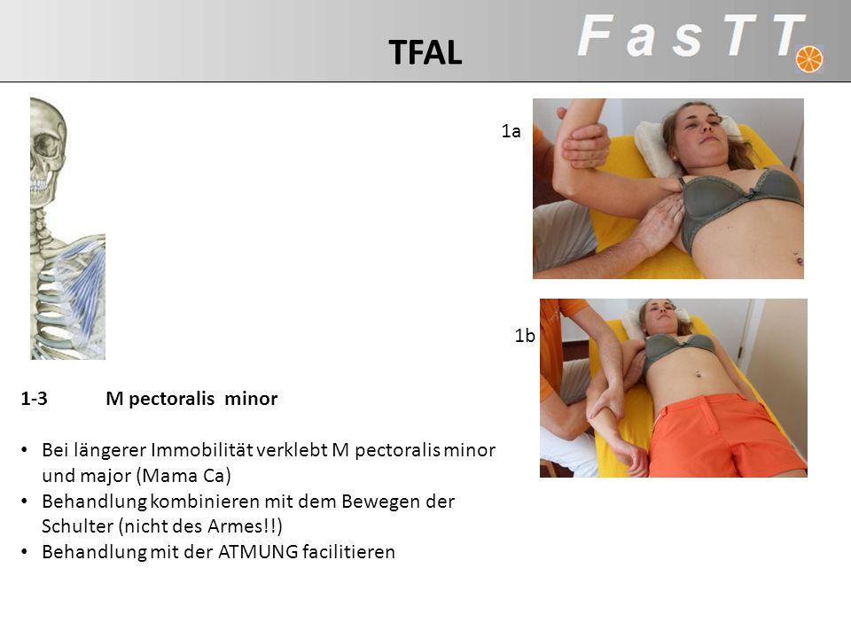 TFAL 1a 1b 1-3 M pectoralis minor